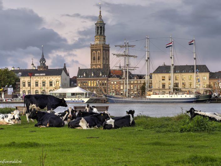 Stadsfront Kampen koeien_